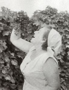 grape kibbutz